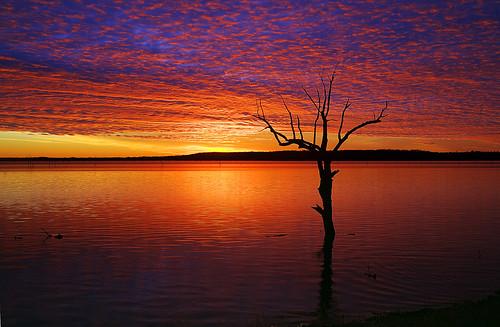 フリー画像| 自然風景| 湖の風景| 夕日/夕焼け/夕暮れ| 樹木の風景| アメリカ風景|      フリー素材|