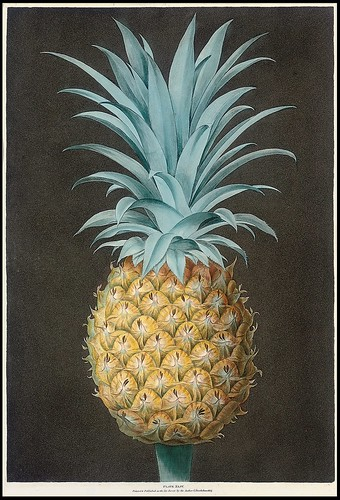 Smooth Leaved Green Antigua Pineapple - George Brookshaw