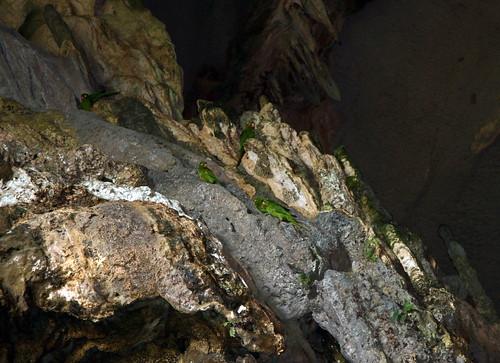 Amazona parrots from Cueva de las Lechuzas (Owl Cave)