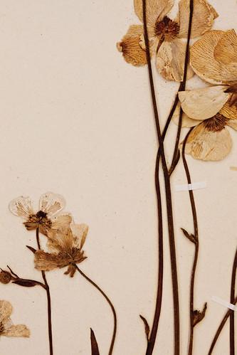 Herbarium-2072