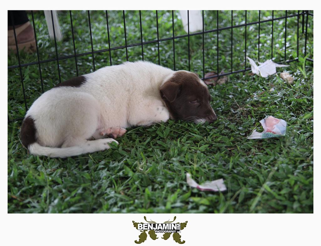 dog_adopt4