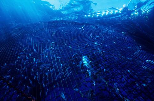 遠洋漁業撈捕畫面。(圖片來源:台灣綠色和平)