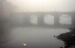 Misty Sunday (A blond-Tess) Tags: bridge mist reflection river scotland canal swan ayr atmospheric fogg ayrshire ayrshirecoast warmingphotofilter