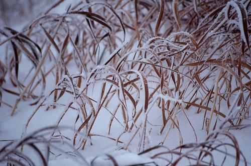 snowy grass