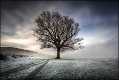 A Tree (angus clyne) Tags: road morning winter sky cloud white mist mountain snow cold tree fall field grass fog clouds forest sunrise dawn scotland high frost branch cloudy path farm bare hill perthshire lawn tracks scottish bank tay loveit fave sycamore trunk lone loch slope lonetree lonly quadbike atumn flikcr xoxoxox acharn thefarmers inthehills colorphotoaward notmyquadbike