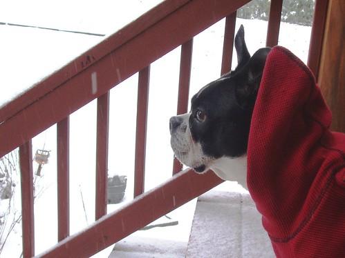 Virginia contemplates the snow