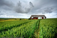 The Old Barn (Terry Yarrow) Tags: uk light england sky storm clouds barn rural canon walking landscape countryside farm farming grain cereal valley crop dorset purbeck cerial purbecks eos5d chaldonherring