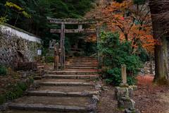 Torii gate @ Miyajima island