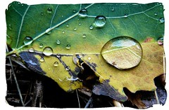 The rain (mariannakoutna) Tags: macro lines rain leaf drops colours structure list makro soe farby outstandingshot anawesomeshot d kvapky theperfectphotographer goldstaraward truktra lnie