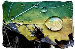 The rain (mariannakoutna) Tags: macro lines rain leaf drops colours structure list makro soe farby outstandingshot anawesomeshot dážď kvapky theperfectphotographer goldstaraward štruktúra línie
