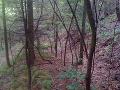 28 - Trail