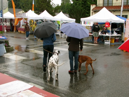 Two dogs, two umbrellas