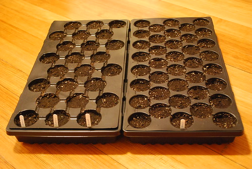 Seeded trays