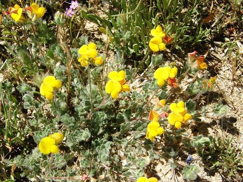 Sigue la caminata, florcitas amarillas