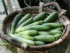 zucchini raccolti oggi
