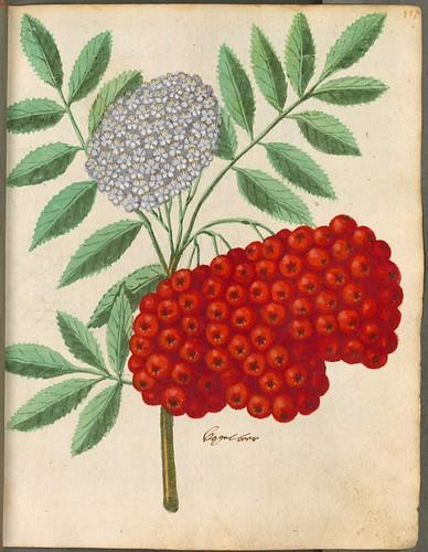 Hortulus Monheimensis 00245