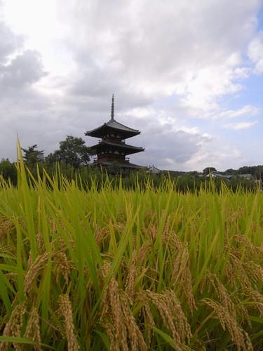 法起寺三重塔とコスモス-11