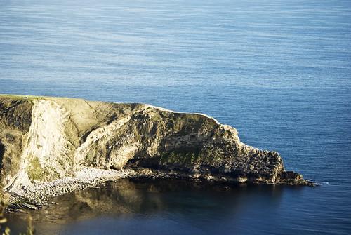 Bassett Hound (Lulworth Cove Limestone Folding) - Copyright R.Weal 2009