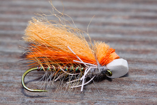 October Caddis by The Fly Shop