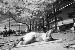 10 (McGography) Tags: bw film cat 35mm waterfall nathan minolta minoltax700 35mmfilm nate infrared x700 efke deadcat blackandwhiteinfrared bwinfrared efkefilm efkeinfrared mcgarigal