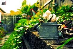 Life (8/365) (simonsyh) Tags: life green fall nikon backalley dof tn bokeh memphis grow growth nikkor d80 18135mm studio494