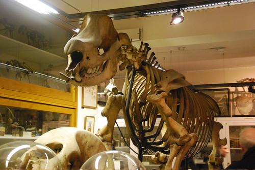 Grants Zoology Museum, University College London, Bloomsbury, December 4th 2009