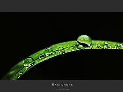 Raindrops [Explore 2011-05-28 #345] (Daniel Wildi Photography) Tags: macro green water grass rain switzerland drops raindrops gorge 60mm waterdrops tamron sense schwarzwasser mittelhusern cantonberne aekenmatt