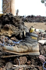Fieldwork (Pancholp) Tags: birds boot volcano ecuador aves pajaros animalia pinta lavarocks pyrocephalusrubinus vermillionflycatcher galapagosislands chordata galapagos