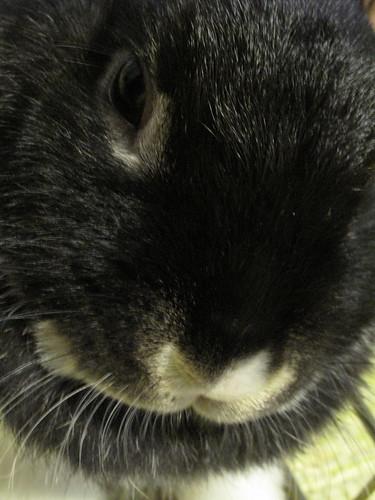Oreo's close up!