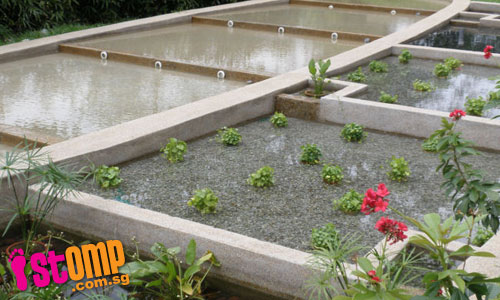 Biotope garden: A source of cleansing rainwater
