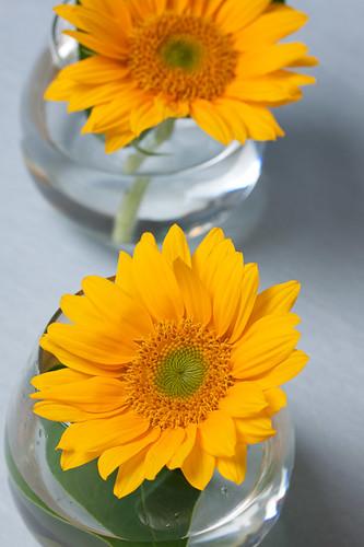 0908 flowers #1