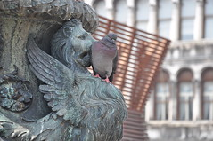 Kiss from the winged Leo (Vikram Nanivadekar) Tags: venice italy nikon pigeon venezia stmark wingedlion d90