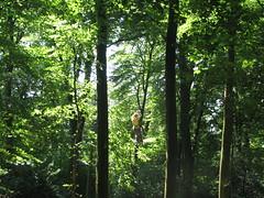 IMG_1870 (strongwater) Tags: dave jan bo velbert klettern witte klimmen svenja ilka luza strongwater waldkletterpark