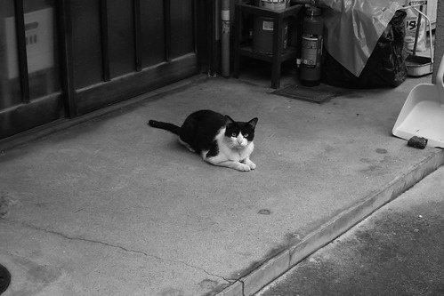 Today's Cat@20090811