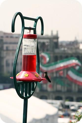 zocolo -Mexico City, hummingbird by you.