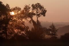 Sunrise silhouettes (:Linda:) Tags: morning mist tree silhouette germany landscape thringen weide village thuringia sonne sonnenstrahlen willowtree weidenbaum schackendorf