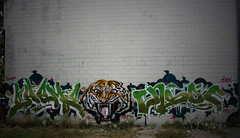 Cat Spray (Scotty Cash) Tags: ed 2009 hardy ensoe sueme