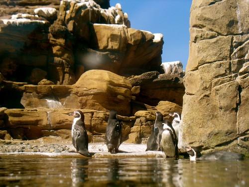 Penguin Exhibit