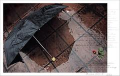 ... {Da 61/365} (..  ..) Tags: canon reflex lluvia rosa 365 paraguas baldosas naturallighting luznatural 400d canon400d 365dastureto365daysyourchallenge luduen