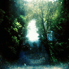 Sunlight (Kerrie McSnap) Tags: sunlight green film nature creek mediumformat landscape holga spring lomo xpro lomography crossprocessed crossprocess toycamera melbourne provia northcote merricreek fujiprovia