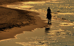 Riding the shore (PegaPPP) Tags: sea horse water gold golden sand mare ride riding shore cavallo spiaggia luce lonliness silouhette gladiator oro pega impronte solitudine goldenhours dorata