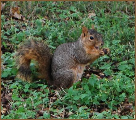 Smiley-Squirrel