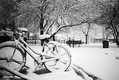 Bike in the snow (Jerome Pouysegu) Tags: voyage city trip travel blue trees winter wallpaper vacation portrait sky snow france green art bike canon landscape photography vacances photo europe photographie hiver bleu ciel arbres jerome 24 neige wallpapers toulouse paysage velo fond ecran photographe roseraie amouroux blackwhitephotos pouysegu