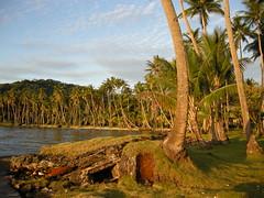 Japanese bunker at the Truk Blue Lagoon Resort (mattk1979) Tags: ocean trees island japanese paradise pacific palm bunker tropical weno chuuk federatedstatesofmicronesia truklagoon trukbluelagoonresort