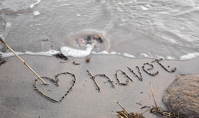 love havet