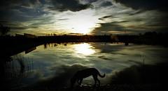 (RominikaH) Tags: sol water lago atardecer agua d70 sombra zaragoza reflejo contraste beber ritah flickraward rominikah