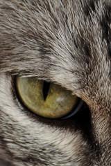 Chico. (tato-esteban) Tags: pet cats animal cat ojo feline kitty gatos gato felino mascota