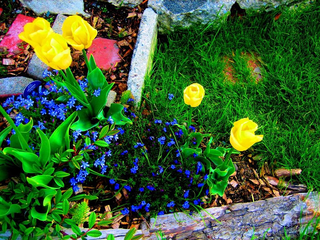 Garden by www.metaphoricalplatypus.com, on Flickr