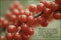 Christmas' Magical Effect (KaleidoscopePhotos) Tags: christmas red macro texture beauty closeup berry soft bokeh magic tint fade 2009 redberry magicwand redberries normanvincentpeale angleton raynox canoneosdigitalrebel raynoxdcr250 canoneosrebelxs 25daysofchristmas 10thdayofchristmas angletontx canonefs1855mm13556is canoneosdigitalrebelxs christmas2009 tenthdayofchristmas softdreamyandethereal imagofabulae photoshopelements8mac photoshopelements8 25daysofchristmasphotochallenge 25daysofchristmaschallenge