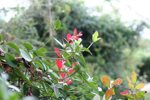 20090919 Edinburgh 20 Royal Botanic Garden 343